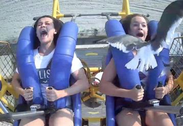 13χρονη βρισκόταν σε παιχνίδι του λούνα παρκ και της ήρθε ένας γλάρος... στο κεφάλι! (video)