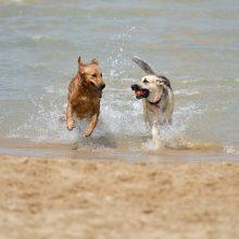 Έχετε σκυλάκι; Αυτές είναι οι παραλίες που μπορείτε να τα πάρετε μαζί σας!