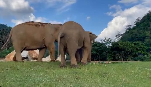 Συγκινητικό βίντεο: Ελέφαντας καθοδηγεί έναν άλλο τυφλό για να βρει το φαγητό του