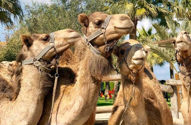 5 φάρμες και ζωολογικοί κήποι για απίθανες βόλτες με τα παιδιά