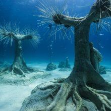 Η απόλυτη μαγεία: Νέες εντυπωσιακές εικόνες από το υποβρύχιο μουσείο Αγίας Νάπας
