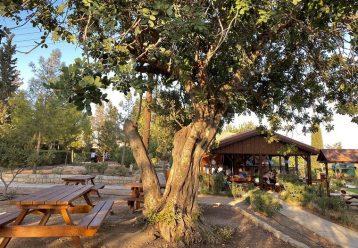 Ο παιδότοπος του Δασικού Πάρκου Λεμεσού είναι μία τέλεια επιλογή για βόλτα με τα παιδιά
