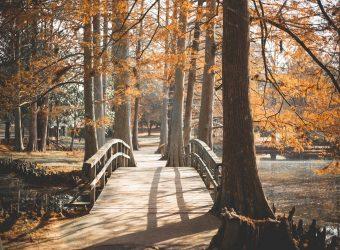 Άνοιξε το Πάρκο Μόρφου, ένας χώρος με πράσινο και γήπεδα για μικρούς και μεγάλους
