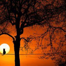 «Το δέντρο που έδινε»: Ένα παραμύθι που αξίζει να διαβάσετε απόψε στα παιδιά σας (βίντεο)