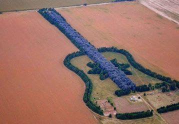 Μπαμπάς και παιδιά φύτεψαν δάσος σε σχήμα κιθάρας στη μνήμη της μητέρας τους
